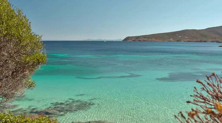 Isola dell 39 asinara scoperte 37 nuove specie marine for Isola che da il nome a un golfo della sardegna