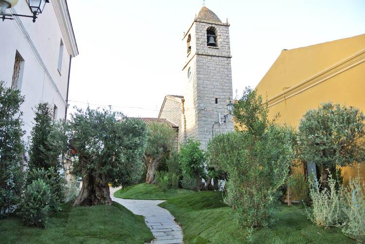 Estate-in-fiore-arzachena-ulivi